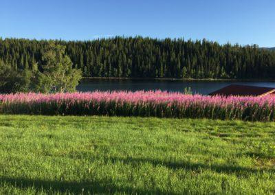 Dovre–Trondheim Walk